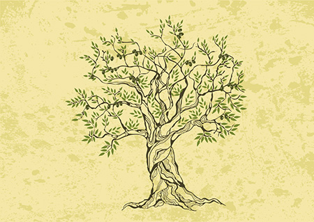 foto-olivi